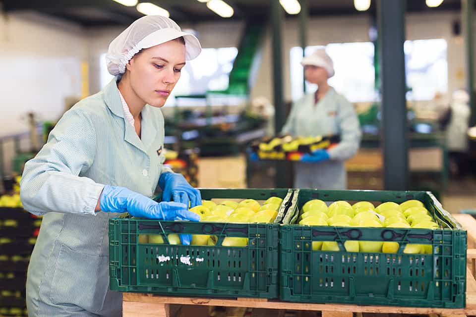Skilled female employee in uniform inspecting quality of apples in the box in a warehouse.